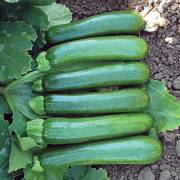 Green Machine F1 Organic Zucchini Seeds image