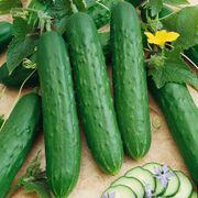 Saladmore Bush Hybrid Cucumber Seeds image