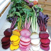 Rainbow Mix Beet Seeds Thumb