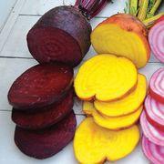 Rainbow Mix Beet Seeds Alternate Image 1