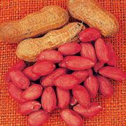 Virginia Jumbo Peanut Seeds
