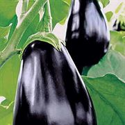 Amadeo Eggplant Seeds image