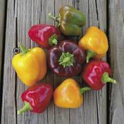 Petite Colour Blend Hybrid Pepper Seeds