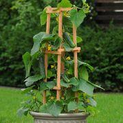 Patio Snacker Cucumber Seeds image