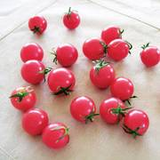 Sweet Treats Hybrid Tomato Seeds