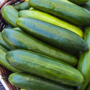 Sir Crunch a Lot Hybrid Cucumber Seeds image