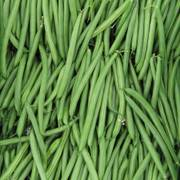 Endeavour Bush Bean Seeds image