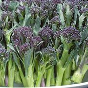 Summer Purple Hybrid Broccoli Seeds