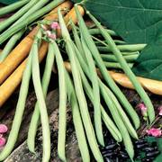 Cobra Bean Seeds