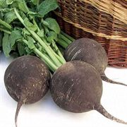 Runder Schwarzer Winter Black Spanish Round Radish Seeds
