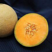Lilliput Hybrid Melon Cantaloupe Seeds Alternate Image 1