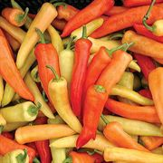Geronimo Hungarian Wax Pepper Hybrid Seeds