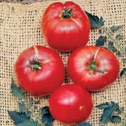 German Johnson Tomato Seeds image