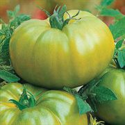 Heirloom Green Hybrid Tomato Seeds image