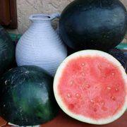 Harvest Moon Hybrid Seedless Watermelon Seeds Alternate Image 1
