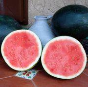 Harvest Moon Hybrid Seedless Watermelon Seeds Alternate Image 2