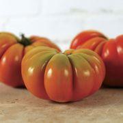 Genuwine Hybrid Tomato Seeds