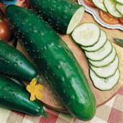 Park's Select Slicer Hybrid Cucumber Seeds image