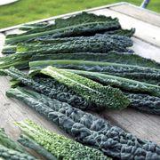 Black Magic Kale Seeds