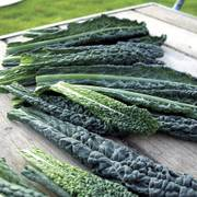 Black Magic Kale Seeds image