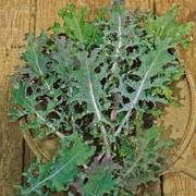 Russian Blend Kale Seeds image
