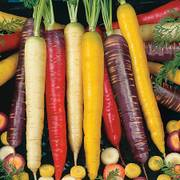 Rainbow Blend Carrot Seeds image