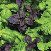 SimplyHerbs™ Try Basil Seeds image