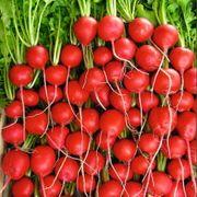 Rivoli Hybrid Radish Seeds