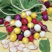 Parks Beauty Blend Radish Seeds