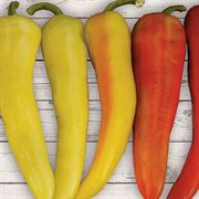 Sweet Sunset Hybrid Pepper Seeds image