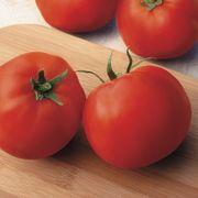 Big Yummy Hybrid Tomato Seeds