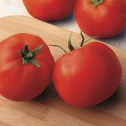 Big Yummy Hybrid Tomato Seeds