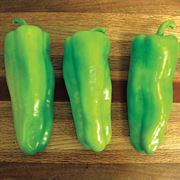 Grenada Hybrid Pepper Seeds image