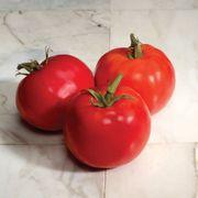 Charger Hybrid Tomato Seeds Alternate Image 1