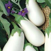 White Star Hybrid Eggplant Seeds image