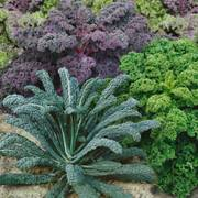 Garden Blend Organic Kale Seeds image