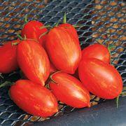 Firecracker Hybrid Tomato Seeds Image