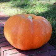 Cinderellas Carriage Hybrid Pumpkin Seeds