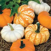 Mini Harvest Blend Pumpkin Seeds