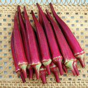 Candle Fire Hybrid Okra Seeds
