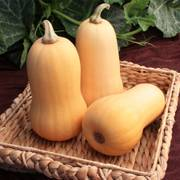 Lil' Dipper Hybrid Winter Squash Seeds image