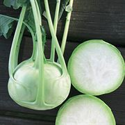 Konan Hybrid Kohlrabi Seeds