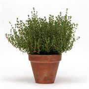 SimplyHerbs™ Thyme Seeds image