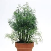 SimplyHerbs™ Dill Seeds image