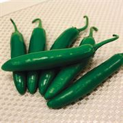 Sureno Hybrid Pepper Seeds