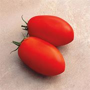 Optimax Hybrid Tomato Seeds