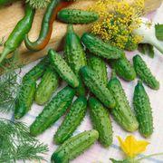 Parisian Organic Hybrid Gherkin Cucumber Seeds image