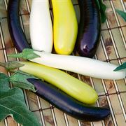 Fingerling Blend Eggplant Seeds image