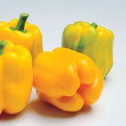 Admiral Hybrid Pepper Seeds Alternate Image 1