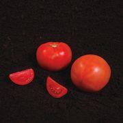 Summerpick Hybrid Tomato Seeds